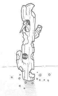 cactus aliment