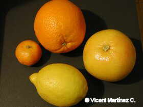 citrus fruit d'hivern