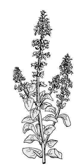 detall de la planta