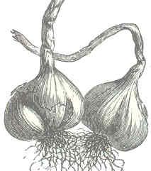 bulb dibuix