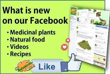 Be fan of Botanical