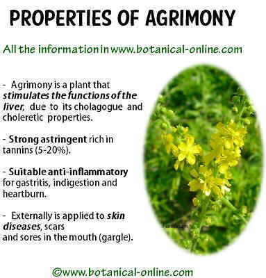 Properties of agrimony