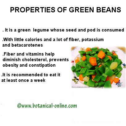 Green beans properties
