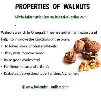 Properties walnuts