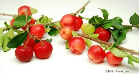 Fruits and branches of acerola