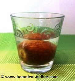 avocado seed submerged in water to germinate.