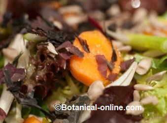 seaweed dulse on a salad