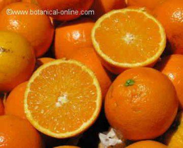 oranges in a market
