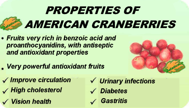Properties of cranberry cranberries and their benefits