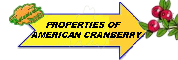 Properties of American cranberries picture