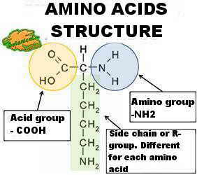 Chemical structure of an amino acid