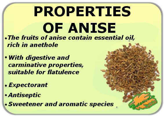 medicinal properties of green anise