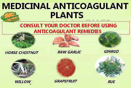 main anticoagulant medicinal plants