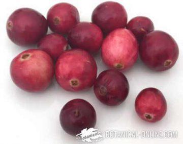 American cranberries