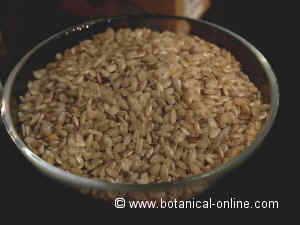 whole rice