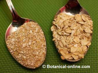 Oat bran (left) and oat flakes (right)