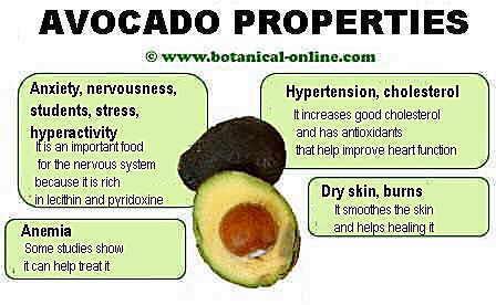 properties of avocado
