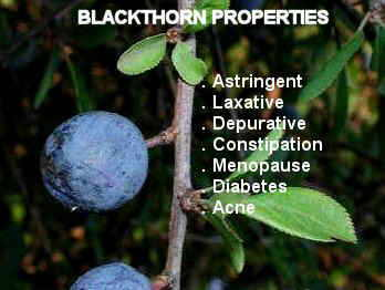 blackthorn properties