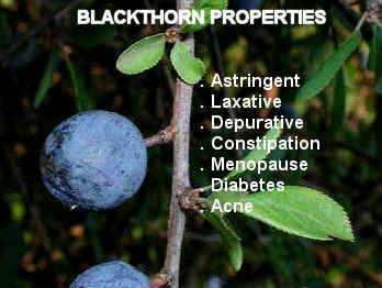 blackthorn properties