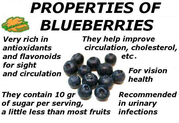 main properties of blueberries