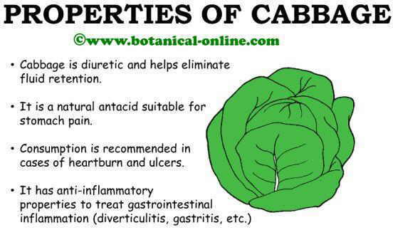 Cabbage medicinal health properties