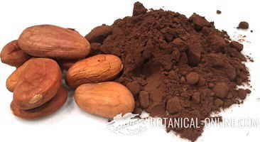 Photo of seeds of pure cocoa and cocoa powder