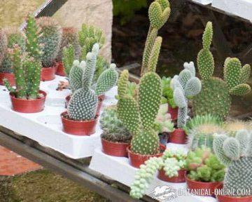 suculent plants in a garden store