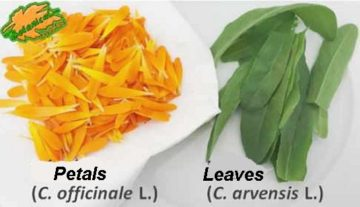 petals leaves calendula salad wonder recipes