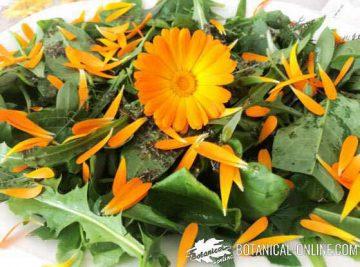 calendula salad