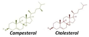 chemical formula phytosterol campesterol and cholestero