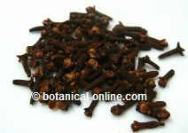 Clove for malaria