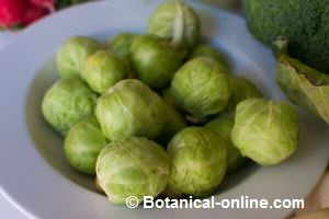 Brussels sprouts the outer leaves removed.