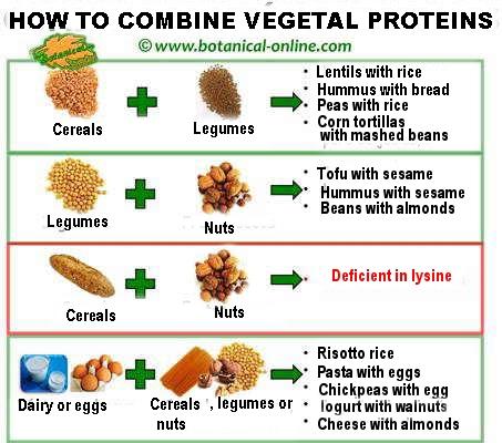 vegetal-protein-combinations