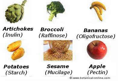 complex carbohydrate foods
