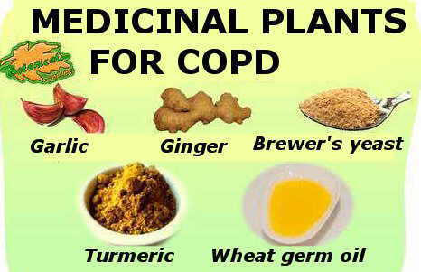 plants and supplements that are usually used in the natural treatment of chronic obstructive disease