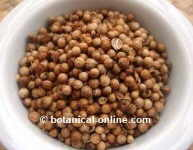 Coriander as stomach tonic