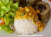 curry sauce with turmeric
