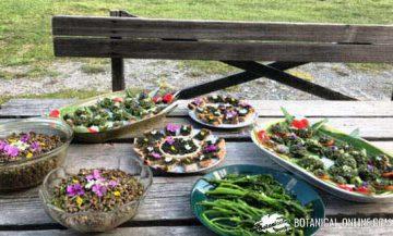 wild plants course montserrat enrich