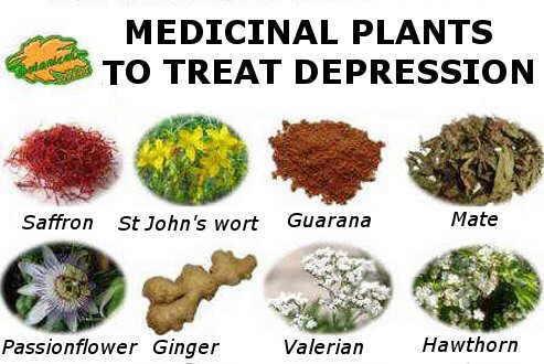 depression plants