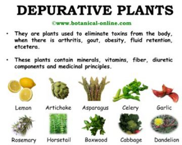 Depurative plants
