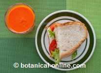 Vegetarian sandwich and carrot juice