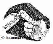 Sulfur as an insulin stimulant