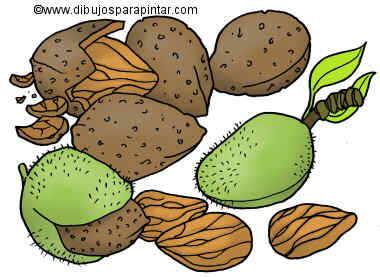 Big drawing of almonds