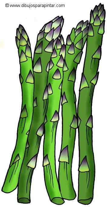 Big drawing of asparagus