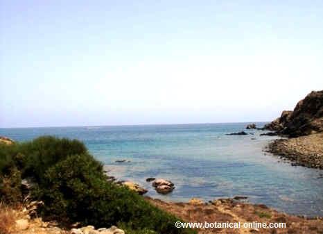 Mediterranean sea coast