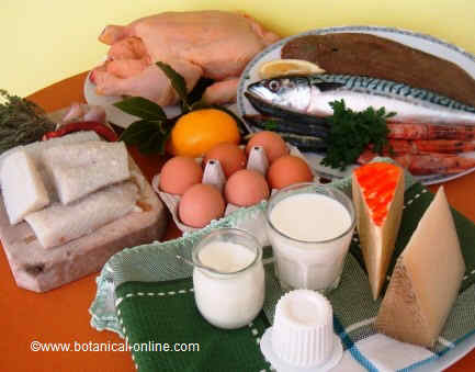 Source of proteins in the Mediterranean diet