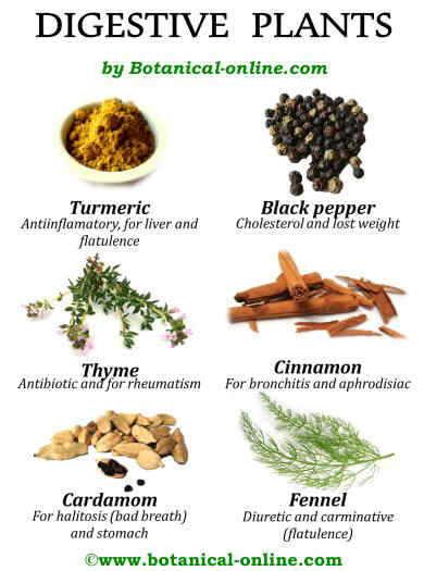 Digestive plants