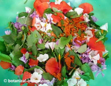 wild leaves, flowers and fruits salad
