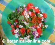 Salad with wild leaves and flowers