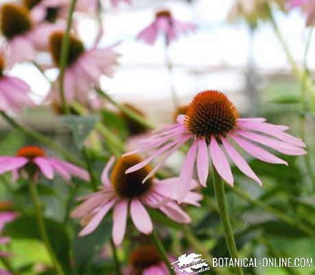 Importance of medicinal plants – Botanical online